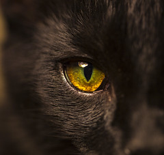 kitty eye (gotmyxomatosis69) Tags: kitten kitty cat feline pet animal eye eyeball iris cateye eyeofthetiger canon 100mm macro teamcanon macrophotography macropic eyephotography