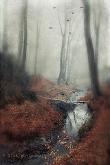 creek (Dyrk.Wyst) Tags: 2016 atmosphere bach baretrees branches bume colors composition conceptual creativephotography creek deutschland dreamy fineart fog forest germany impressionistic landscape landschaft licht malerisch mist mood mystical natur nature nebel noone outdoor painterly photoshelter rain retro stimmung texture trees vertical wald water wet winter woodland wuppertal