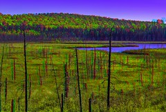 En Route 129 in Ontario 3-D / Anaglyph / Stereoscopy / HDR / Raw (Stereotron) Tags: north america canada province ontario forest woods outback backcountry indiansummer autumn fall landscape outdoor nature trees vegetation anaglyph anaglyph3d redcyan redgreen optimized anaglyphic anabuilder 3d 3dphoto 3dstereo 3rddimension spatial stereo stereo3d stereophoto stereophotography stereoscopic stereoscopy stereotron threedimensional stereoview stereophotomaker stereophotograph 3dpicture 3dglasses 3dimage twin canon eos 550d yongnuo radio transmitter remote control synchron in synch kitlens 1855mm tonemapping hdr hdri raw