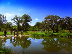 New Pond Reflection (dimaruss34) Tags: newyork brooklyn dmitriyfomenko image summer brooklynbotanicgarden reflection