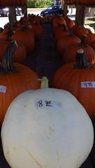 Summer Drought, Early Fall - IMGP6361 (catchesthelight) Tags: nh fall autumncolors fallfoliage whitepumpkin orange pumpkins