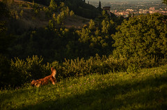 woof (Giulia Maria Pontesilli) Tags: nature sunset shadows gree hill blue sky summer hot red august bologna italia italy hiking collibolognesi pretty beautiful natura forest wood naturalistic sun sunny relax peace joy soul mind dog mansbestfriend