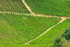 Vigne marchigiane (luporosso) Tags: natura nature naturaleza naturalmente nikond300s nikon vigna vineyard vino scorcio scorci country countryside marche fermo geometrie geometry