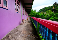 ,, The Apprentice ,, (Jon in Thailand) Tags: dog dogs k9 running chasing jungle thedogpalace red green blue buddha nikon d300 nikkor 175528 purple pink mama dj littledoglaughedstories