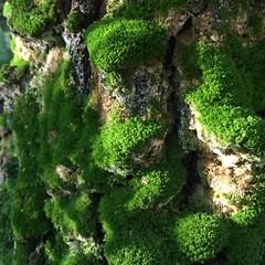 Forest (ekaterinakomarova) Tags: moss green nature forest