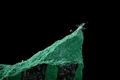 Asbestos in Green Floor Tile (Asbestorama) Tags: asbestos floor tile acm flooring sample chrysotile fiber fibers fibre firous green mastic safety hazard danger exposure risk ih amiante amianto asbesto macromondays
