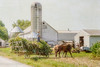 Bringing in the Corn (Singing Like Cicadas) Tags: 2016 september summer barn horses harvest amish amishcountry country countryside farm rural ruralohio middlefield geaugacounty onethousandgifts texture ohio