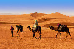 The Berbesky tribe passes the desert in Africa (paulrogen) Tags: africa indigenous culture nature travel desert sahara transportation people tourism camel landscape horizontal male traditional morocco men red bedouin sky brown walking riding sunset adventure sand egypt african animal dune sun color silhouette nomadic guide dusk ethnic ukraine