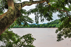 _DSC8233 (CS@ndoval) Tags: mekong river water tree moss green trees jungle hill leaves lichen serene quiet asia laos