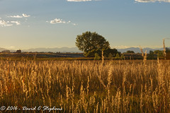 Purple Mountains Majesty...Amber Waves (dcstep) Tags: f4a7177dxo grass ambergrass prairiegrass allrightsreserved copyright2016davidcstephens dxoopticspro111 canon5dsr ef70200mmf4lis cherrycreekstatepark colorado usa greenwoodvillage