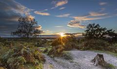 Rockford Sunset (nicklucas2) Tags: sunset newforest rockfordcommon tree cloud grass flare bracken landscape