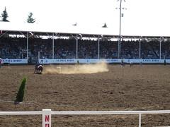 2012 7-4 St Paul Oregon Rodeo (37) (SuzGirlz) Tags: horses people horse sun hot animals cowboys oregon cow cowboy cows crowd stpaul dirt rodeo 4thofjuly calf cowboyhat calves stpauloregon stpaulrodeo