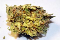 Purple Dream (nugsh0ts) Tags: detail up weed close shot serious pot olympia wa medicine marijuana keif nug dispensary trichome