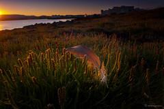 FJUR / FEATHER (HPHson) Tags: morninglight iceland feather morgunbirta fjur hphson