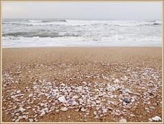 Shells on the sand - at sunrise (Indianature9) Tags: sea shells india beach sunrise sand unescoworldheritagesite monuments seashore tamilnadu mahabalipuram mamallapuram pallavas pallavadynasty indianature mallai mahabalipurambeach snonymous pallavakingdom