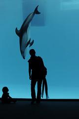 20120703 Port of Nagoya Aquarium 3 (BONGURI) Tags: family baby nikon mother nagoya 母 愛知 aichi イルカ 家族 海豚 名古屋 ママ シルエット portofnagoya 赤ちゃん 名古屋港 portofnagoyapublicaquarium お母さん 名古屋港水族館 あかちゃん dorphin d3s afszoomnikkor2470mmf28ged nagoyapublicaquarium gettyimagesjapan12q3