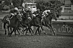 Now or never (Iván Adrián) Tags: horse speed caballos jockey jinete carrera horserace rate hipodromo