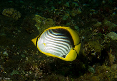 (zatiqs) Tags: ocean reunion la dive indien etang sal