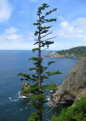 Tree, Water, Coast (Adventures with E&L) Tags: oregon pacificocean oregoncoast oregoncoasttrail