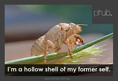 Hollow feeling (phub.com.au) (Phub.) Tags: baby kids hub bug mom dad father mother shell mum parent hollow phub insectsleevejournalgreenhatchedlarvasummer