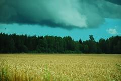 awaiting the rain in August