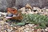 Just a Big Yawn!  (Explored) (Pat L.314) Tags: reptile lizard tulsazoo animalyawn coth supershot specanimal caimanlizard sunrays5