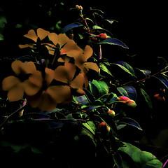 nowhereland erice (italianoadoravel .BACK ,,,,,,,,,,,,) Tags: brazil fab people sunrise wonderful landscape photo perfect colorful vivid master doorway stunning parana picturesque soe blueribbon onblue smörgåsbord cubism bestpic fpc blueribbonwinner singintheblues supershot 5photosaday flickrsbest passionphotography fineartphotos mywinner bigfave abigfave platinumphoto anawesomeshot impressedbeauty aplusphoto superbmasterpiece travelerphotos diamondclassphotographer flickrdiamond ysplix masterpic excellentphotographerawards superlativas theunforgettablepictures onlythebestare thatsclassy adoublefave overtheexcellence colourartaward wonderfulworldmix picturefantastic betterthangood theperfectphotographer coloursplosion goldstaraward anticando thebestofday gününeniyisi clevercreativecaptures landscapesdreams unlimitedphotos worldtrekker ourmasterpieces rubyphotographer salveanatureza bestoneframeshortnominee overtheshot llovemypics flickrlovers peachofashot arstisticexpression