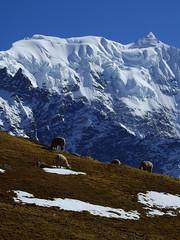 Nevado Collque Cruz - 5960 mts (Mono Andes) Tags: andes per ausangatetrek glaciar glacier cordillleravilcanota nevadocollquecruz
