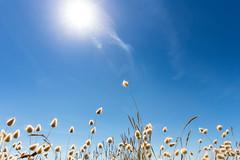 Enjoying holidays... (Zeeyolq Photography) Tags: blue dune holiday sky summer sun vacances plouarzel bretagne france