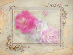 Love planted a rose, and the world turned sweet. (Katharine Lee Bates) ** Explored ** (boeckli) Tags: love rose plant pflanze pink red pastel flowers blumen blten blossoms blooms textures texturen outdoor frame rahmen katharineleebates quotes plants topaz ti2 impression2 topazimpression2 pictureframe