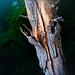 160724-tree-trunk-sand-filter-flash.jpg