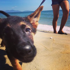 1st time at the ocean. #HoiAn #Vietnam #Enzo #Puppy #Alsatian  #Sea #Ocean #Sand #Morning #Legs #Tanned #my (Makaveli 8) Tags: anbang vietnam hoian cute tanned legs sand ocean beach germanshepard alsatian puppy enzo instagramapp square squareformat iphoneography mayfair