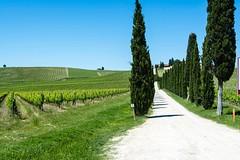 Viale con cipressi (Marco Domanico) Tags: toscana monteriggioni italia it chianti cipressi casale castellina