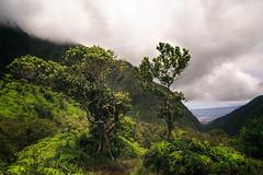 Waipio Hike Summit (kevinwenning) Tags: jungle trees hike kevinwenning intentionallylostcom forest maui mountains waipiovalley fog wenning hawaii trail clouds