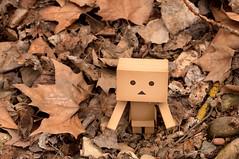 Camuflaje (Geno G.) Tags: danbo yotsuba doll exterior campo juguete toy otoo hojas caja box