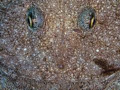 P9141457 (Jeannot Kuenzel) Tags: jeannotkuenzel jeannot kuenzel wwwjk4unet jk4u malta scuba under water underwater diving photography macro supermacro olympus epl5 zen port leica dg macroelmarit 45mm f28 asph ois inon z240 240z ucl165 s2000 moods aliensofthesea aliensofthedeepblue alien deep blue mediterranean sea maltaunderwater maltaunderwatermacro maltaunderwaterphotography bestmaltaunderwaterpictures maltamacro underwaterphotography maltascubadiving supermacrophotography underwatersupermacro underwateralien underwaterworld underwatercreature underwatermacro extrememacro superextrememacro