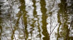 serenity at the water (Dotsy McCurly) Tags: serenity serene water lake pond reflections trees plants nature beautiful park dof bokeh nikon d750 nj