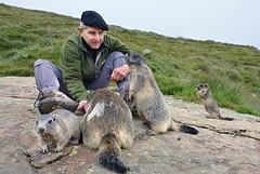 *** (welenna) Tags: alpen alps animals switzerland summer schwitzerland saasfee tiere murmeltier marmot wallis wild
