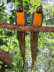 """Le Parc des Oiseaux d'Iguaçu: la grande volière aux perroquets <a style=""""margin-left:10px; font-size:0.8em;"""" href=""""http://www.flickr.com/photos/127723101@N04/29532224152/"""" target=""""_blank"""">@flickr</a>"""