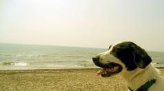 Suri en la playa... (Chayogotica) Tags: vacaciones parasiempre adopta valencia2012