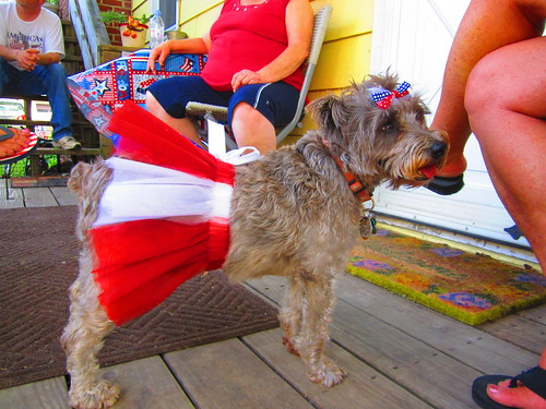 JoJo modeling the lastest in 4th of July fashion for dogs! =)
