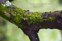The Secret Life of Trees (yeryi) Tags: portrait musgo verde green nature japan forest silver temple calle moss nikon kyoto dof bokeh retrato secret 85mm ciudad natura bosque plata pavilion nikkor 85 japon secrets templo ginkakuji plateado d90 thesecretlifeoftrees