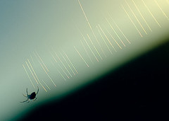 backlit spiderweb (syntithesis) Tags: sunset sun silhouette insect spider web arachnid spiderweb backlit