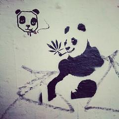 streetart (FOTOKIOSK) Tags: streetart stencil panda hamburg