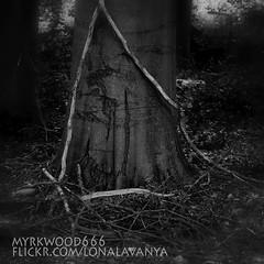 Uruz  (Myrkwood666) Tags: wood bw monochrome forest blackwhite symbol zwartwit sw schwarzweiss bos wald pagan rune futhark uruz asatru seelenwinter mrkskygge myrkwood666