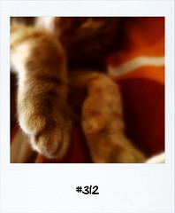 """#Dailypolaroid of 5-8-12 #312 • <a style=""""font-size:0.8em;"""" href=""""http://www.flickr.com/photos/47939785@N05/7724371446/"""" target=""""_blank"""">View on Flickr</a>"""