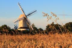 Saxtead Green (Justin Minns) Tags: bos flickr pob sk073 terejected crop landscape saxsteadgreen suffolk sunset web windmill saxtead green