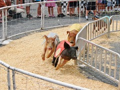 Around The Turn (mcnod) Tags: pig august 2012 westfriendship pigraces howardcountyfair mcnod
