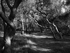 Into the woods (Jimmy Svensson) Tags: trees bw forest blackwhite woods shadows scandinavia lightshadow lightandshadow skane scania hgans strandbaden lumix20mmf17 lumixgf3 lumixdmcgf3 strandbadsskogen