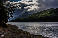 Haida Gwaii (IchiroPhotography) Tags: ocean trees seaweed beach forest coast log pacific logging rocky clearcut haidagwaii
